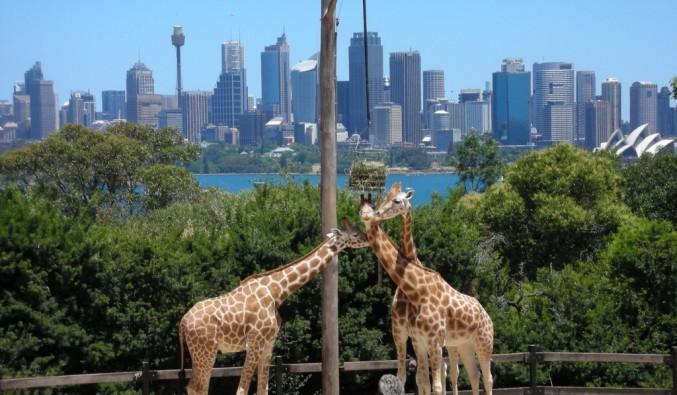 crucero-australia-taronga-zoo (1024x768)