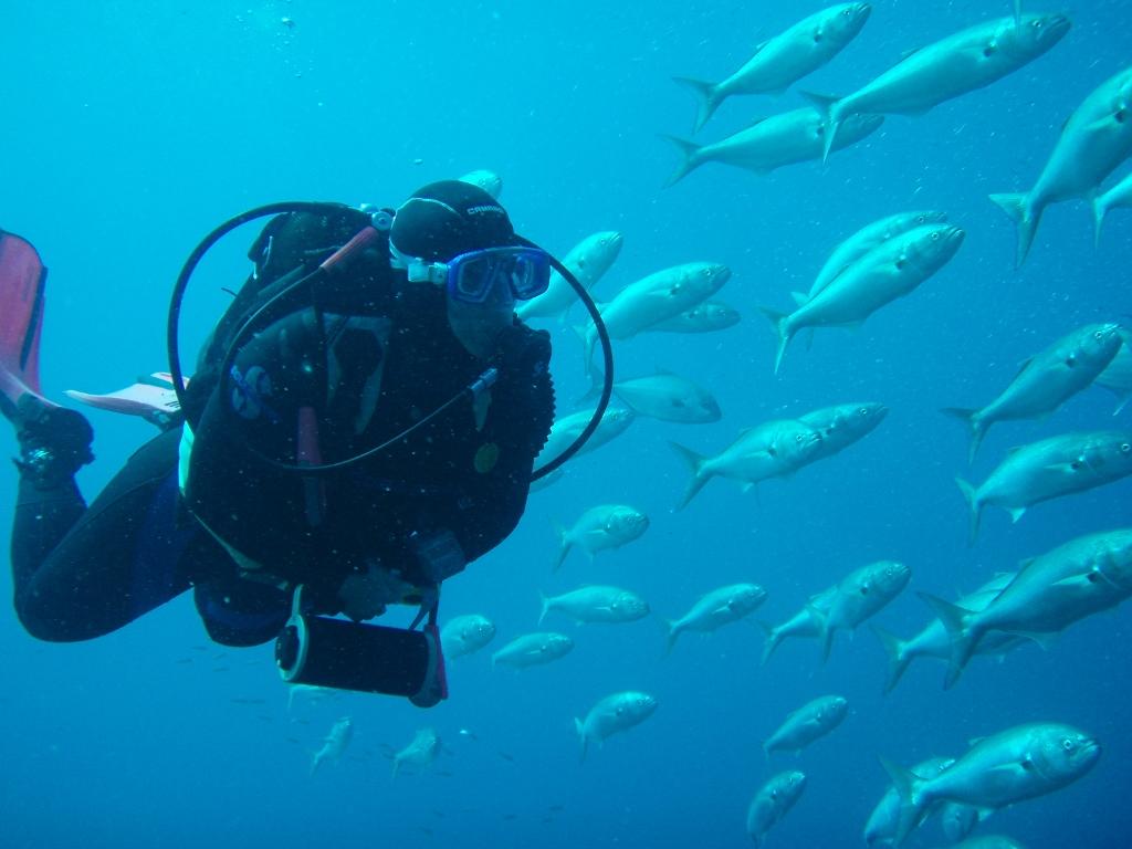 El fondo del mar es también parte de la oferta de ocio de Fuerteventura. Foto Patronato de Turismo de Fuerteventura.
