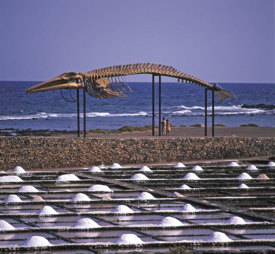 Vista de las Salinas del Carmen. Foto Patronato de Turismo de Fuerteventura.