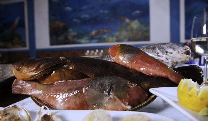 crucero-puerto-gran-tarajal-gastronomia-pescado