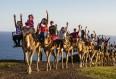 camels-oasis-park-fuerteventura