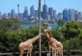 Image de croisiere australie girafe zoo