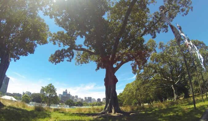 Image de croisiere australie prince alfred park sydney