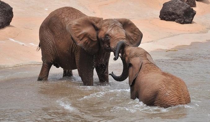 elefantes-oasis-park-fuerteventura